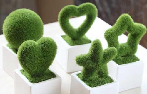 سبزه اسفنجی