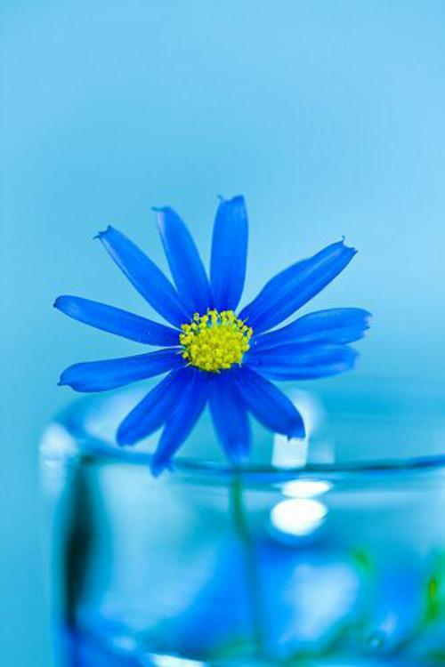 عکس گل برای پروفایل واتساپ