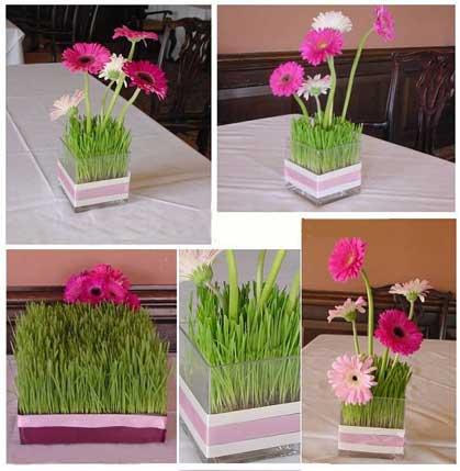آموزش سبزه گندم در گلدان