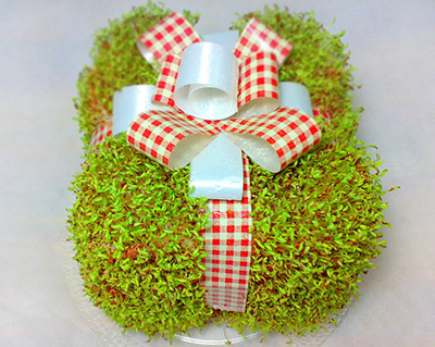 نحوه کاشت سبزه نوروزی,آموزش تصویری کاشت سبزه,اموزش سبزه عید به شکل جعبه کادو