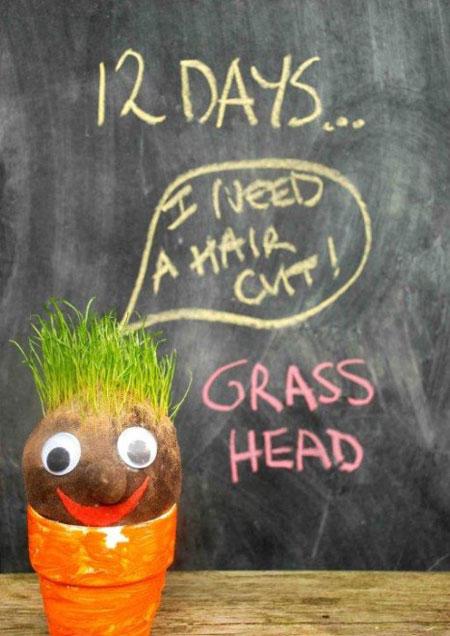 کاشت سبزه نوروز,کاشت سبزه آدمکی