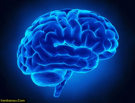پردازش مغز انسان