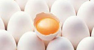 ماسک سفیده تخمه مرغ و ماست